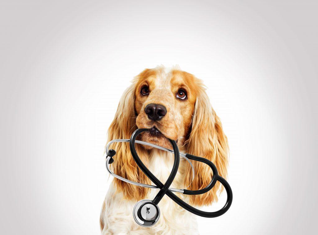 Dog visiting a vet
